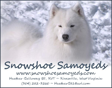 logo for Snowshoe Samoyeds