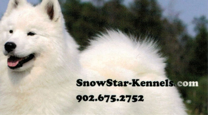 Business card for Snowstar Samoyeds